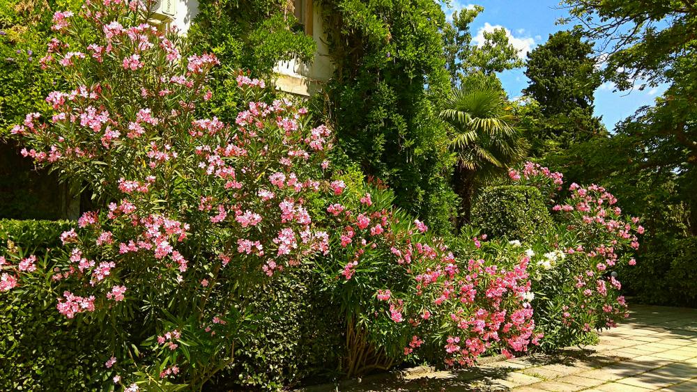 best shrubs